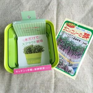 ブロッコリースプラウト 栽培 育て方 容器 種 スプラウトファーム トーホクの種 ブロッコリーの芽