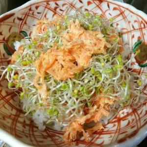 スプラウト 栽培 自家製 手作り ブロッコリースプラウト 食べ方 レシピ どんぶり