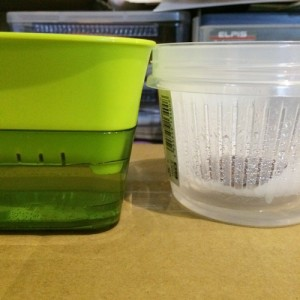 スプラウト 栽培 かいわれ系スプラウト かいわれ大根 ブロッコリースプラウト 栽培 容器 育て方 100均 ホームセンター スプラウトファーム ザル タッパー
