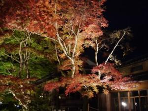 京都 紅葉 もみじ 嵐山 天龍寺 宝厳院 ライトアップ