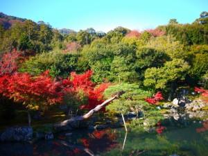 京都 紅葉 嵐山 天龍寺